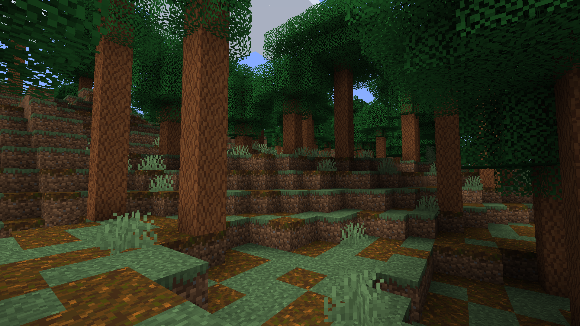 Pire forest