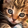 jokish363's avatar