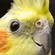 Derpatiel's avatar