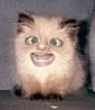 FLAMEMEMBER's avatar