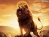 Cobus's avatar