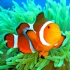Clownfish8888's avatar