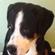 CrankySupertoon's avatar