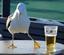 Drunkenseagull's avatar