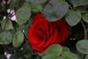 Tr4shM0nk3y's avatar