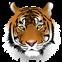 Tiger Kus'