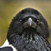 Carolusclen's avatar