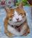 Cat0Ninetails's avatar