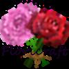 View Hosta_Plantain's Profile