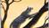 Jexis107's avatar