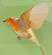 AmauryPi's avatar