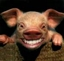 View PigBrains's Profile