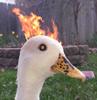 BuggaNoia's avatar