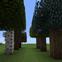 Apricorn Tree Farm